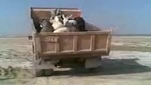 یه کامیون خر......