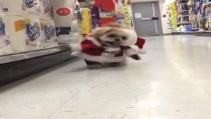 سگ با مزه با لباس بابا نوئل