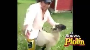دیگه به جای اسب از گوسفند استفاده نکن