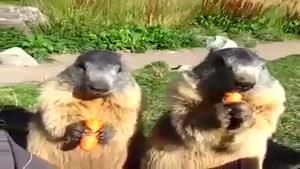 هویچ خوردن خیلی جالب سنجابها