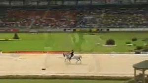 نمایش زیبای اسب
