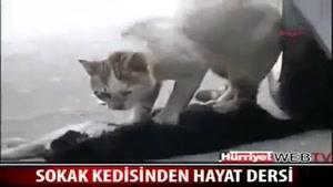 ماده گربه اي در حال مرگ
