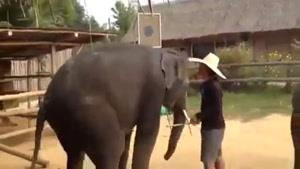 دیدن رقص فیل ها