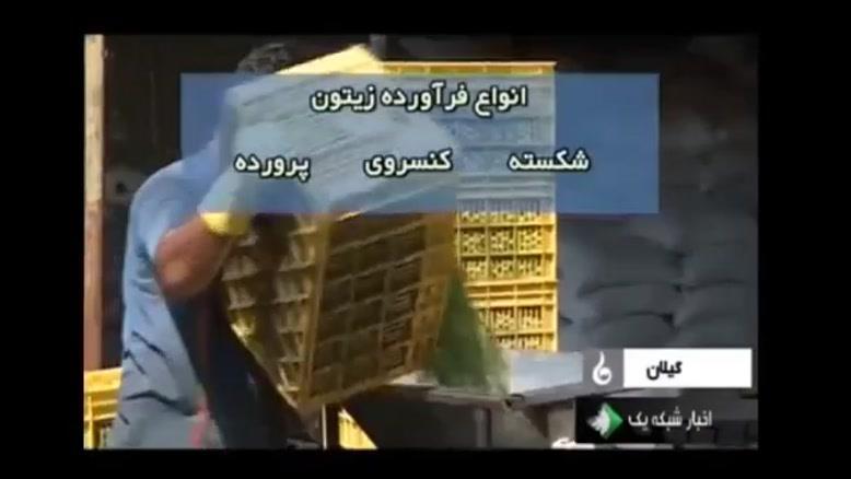 گزارش جالب درباره فراوری زیتون در ایران