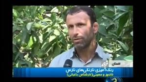 تغییر رنگ میوه برای جذب مشتری در ایران
