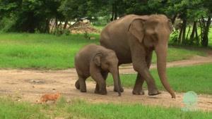 بچه فیل و گربه