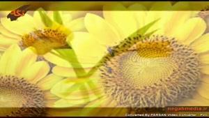 روانشناسی رنگ ها - رنگ زرد