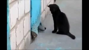 سگ و گربه :|