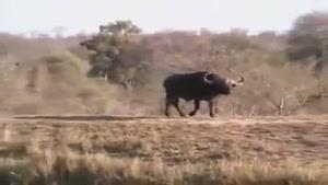 زیبا ترین ویدئو از حیات وحش ،