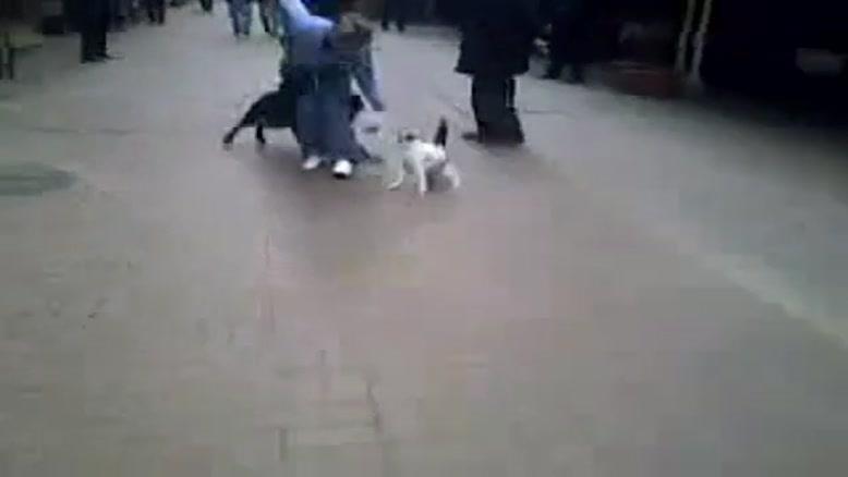 گربه ای که به سگ حمله میکند