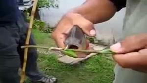 اره است یا ماهی