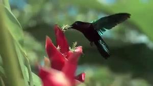 طبیعت زیبا با کیفیت بسیار عالی