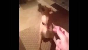 سگ بـاحـال