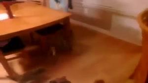 چه توله سگهای باحالی هستن