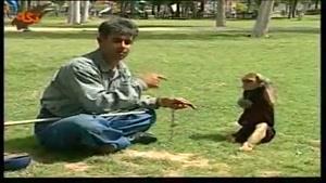 میمون حرف گوش کن