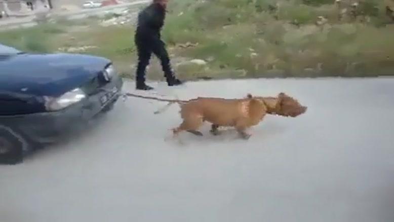 سگ قدرتمند