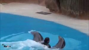 حرکات نمایشی زیبا و دیدنی دلفین ها