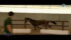 برنامه کاوش - اسب سواری