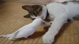 پرنده بهترین دوست یک گربه