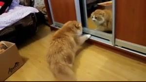 گربه و آیینه