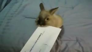 روشی برای باز کردن پاکت نامه