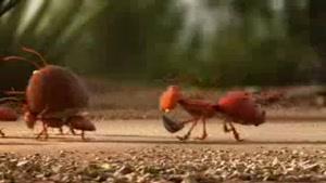 انیمیشن اتحاد مورچه ها