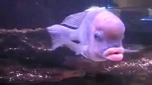 ماهی بسیار بانمک