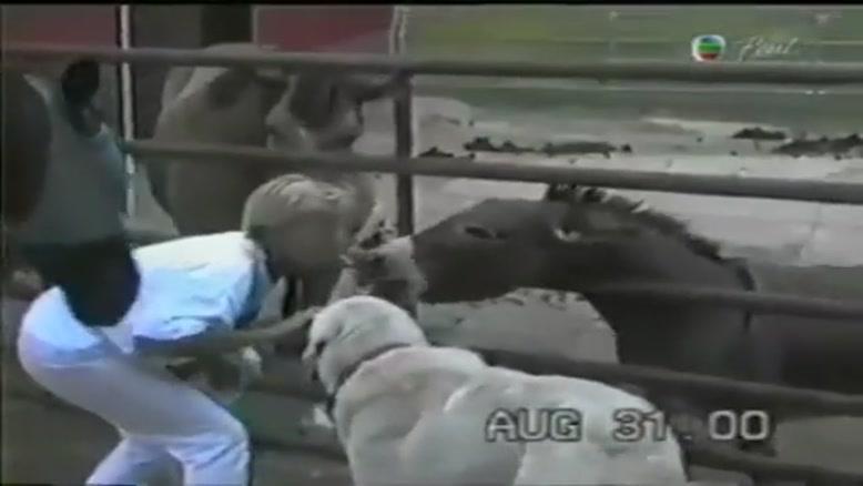 گاز گرفتن حیوانات