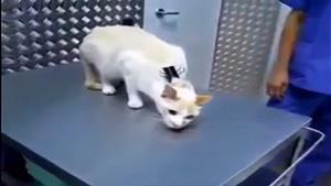 گربه ها