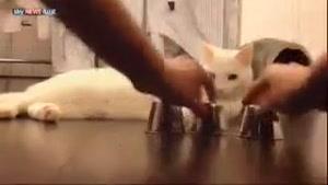 گربه ی باهوش