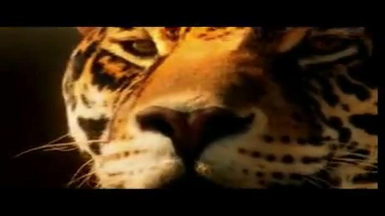 فیلم آهسته از چند جانور وحشی