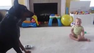 فیل و فنجون در حال بازی