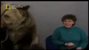حمله خرس به یک خانم