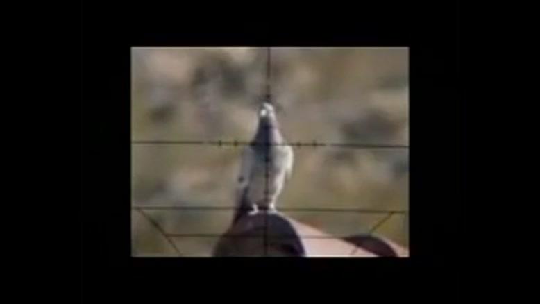 تیراندازی به پرنده