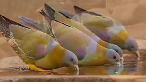 زیبا ترین پرندگانی که تا به امروز کشف شده اند