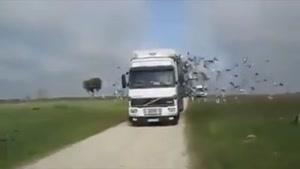 آزاد کردن میلیون ها پرنده