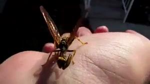 زنبور ترسناک