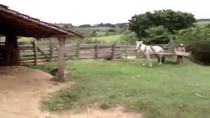 پارک دوبل با اسب