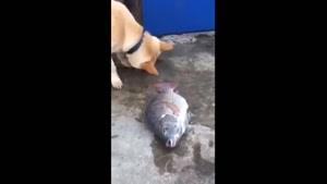 کمک رسانی سگ به ماهی
