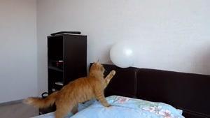ترسیدن گربه