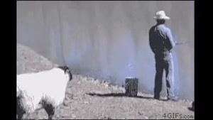 شوخی گوسفندی