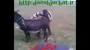 خر هندلی