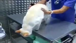 از حرکت انداختن گربه