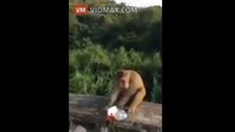 ترسوندن میمون