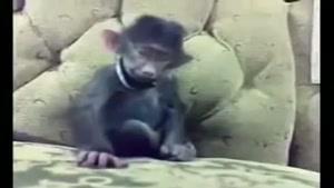 میمون خنده رو