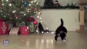 گربه ها و درخت کریسمس