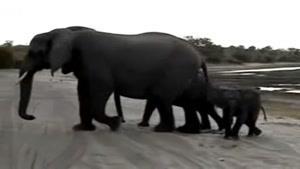 کره فیل