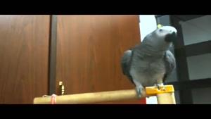 من یه پرنده ام