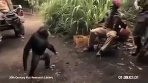 تا شما باشین ک با میمون شوخی نکنید
