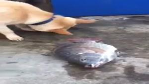 تلاش سگ برای زنده کردن ماهی مرده